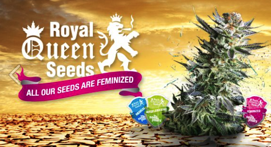 Afbeelding Royal Queen Seeds - QuePasaNL